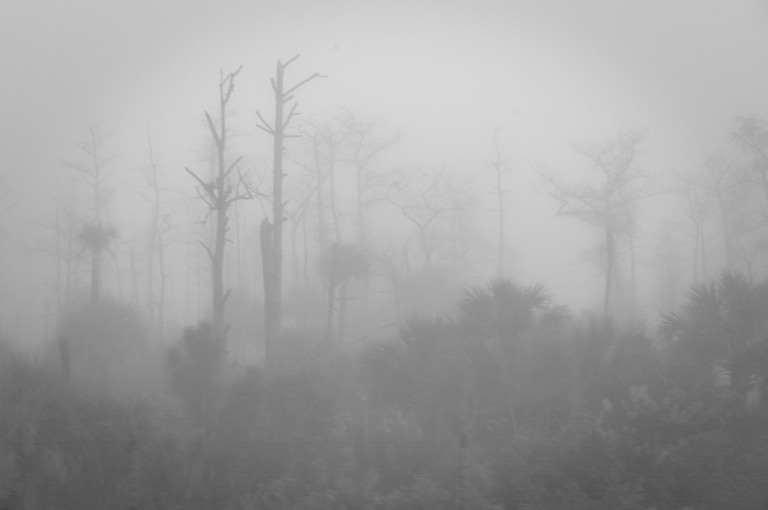 Ghosts of Olde Cypress