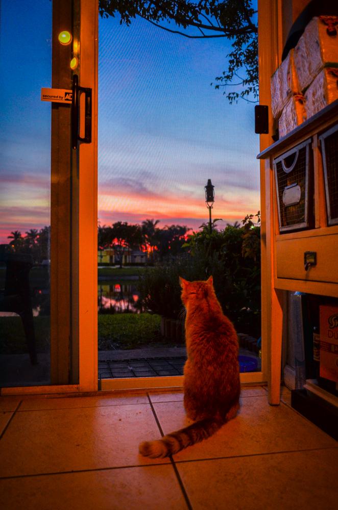 Everyone enjoys a sunset