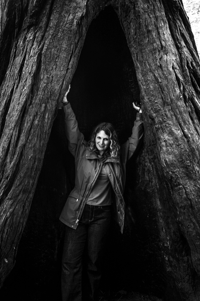 Queen of the Redwoods